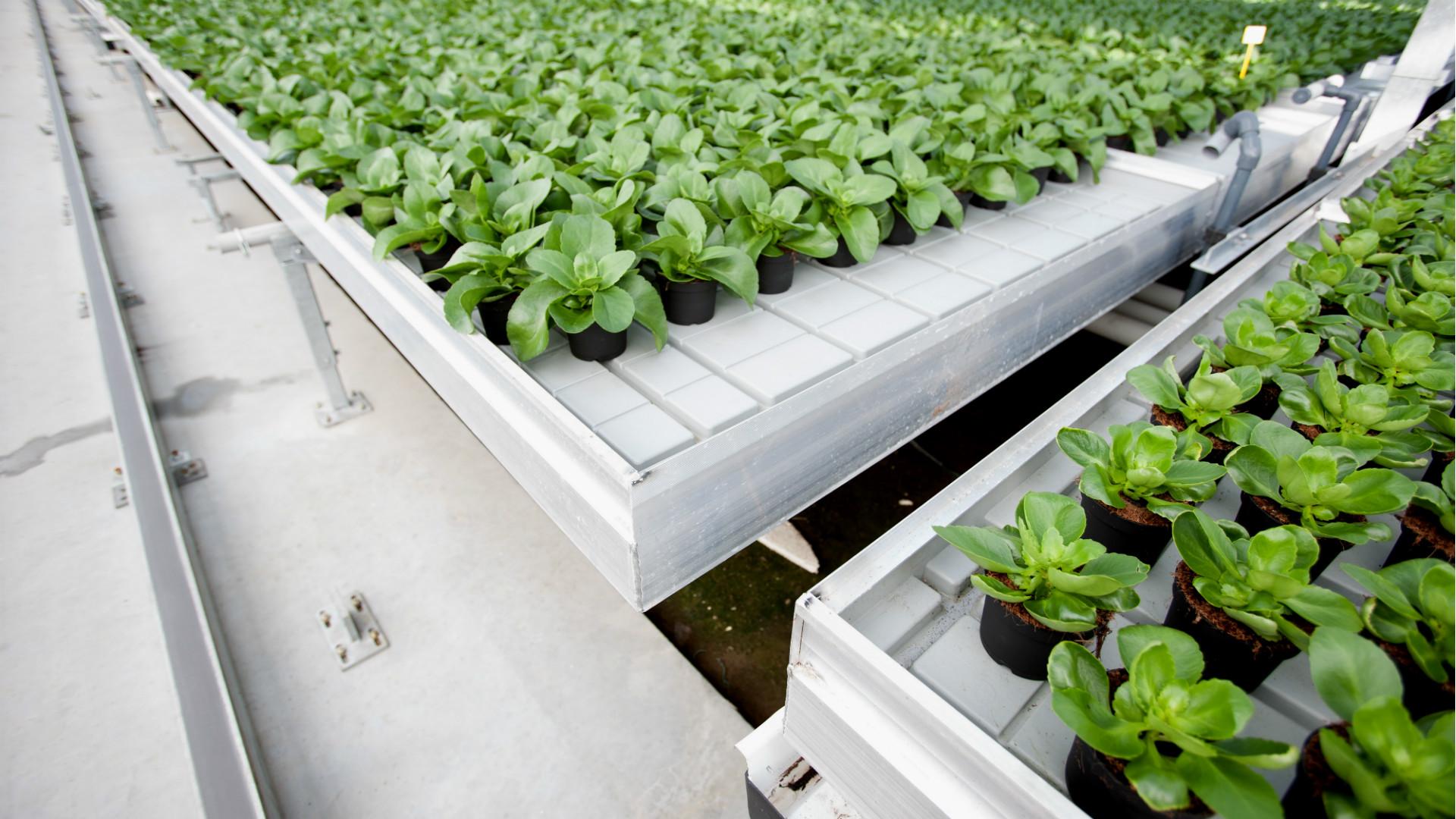 Cultivation solutions | Alcomij