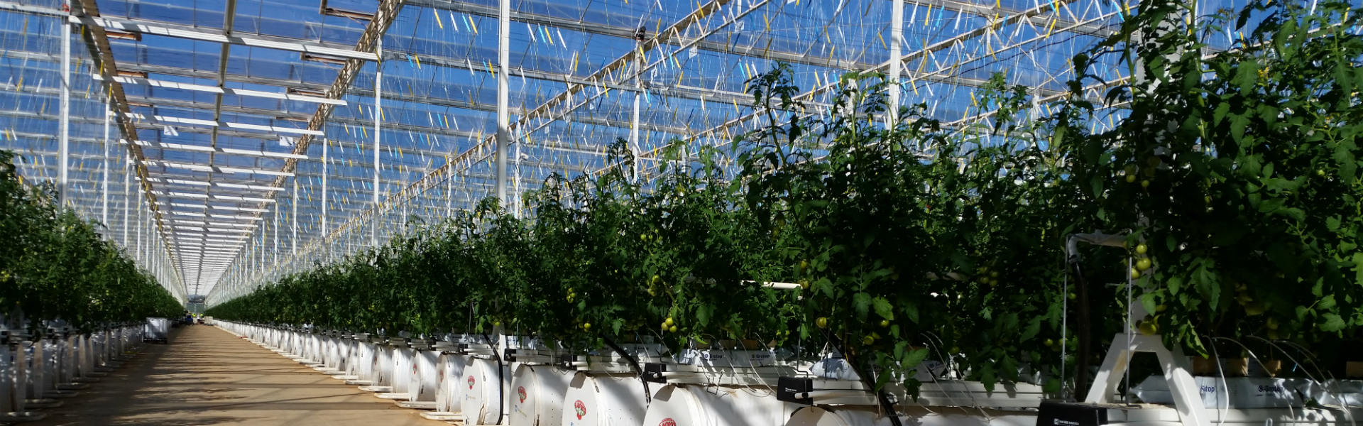 Alcomij's semi-closed greenhouse solutions