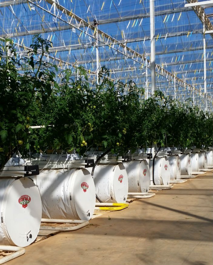 An image of the inside of a semi-closed greenhouse.