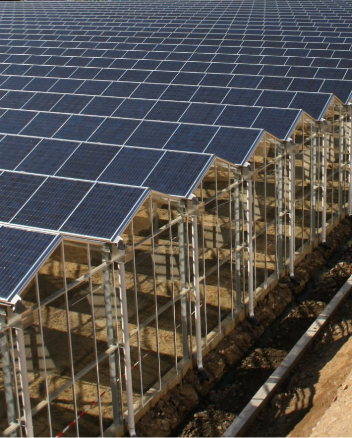An image of Alcomij's solar greenhouse roof system. A solution for sustainable cultivation.