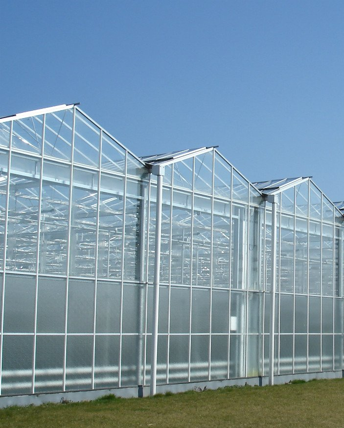 An image of Alcomij's Venlo greenhouse