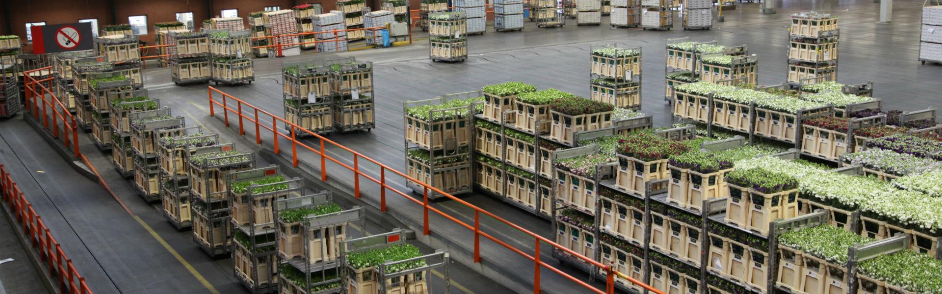 FloraHolland auction carts