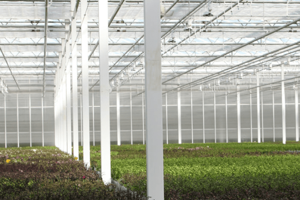 OK-Plant-6